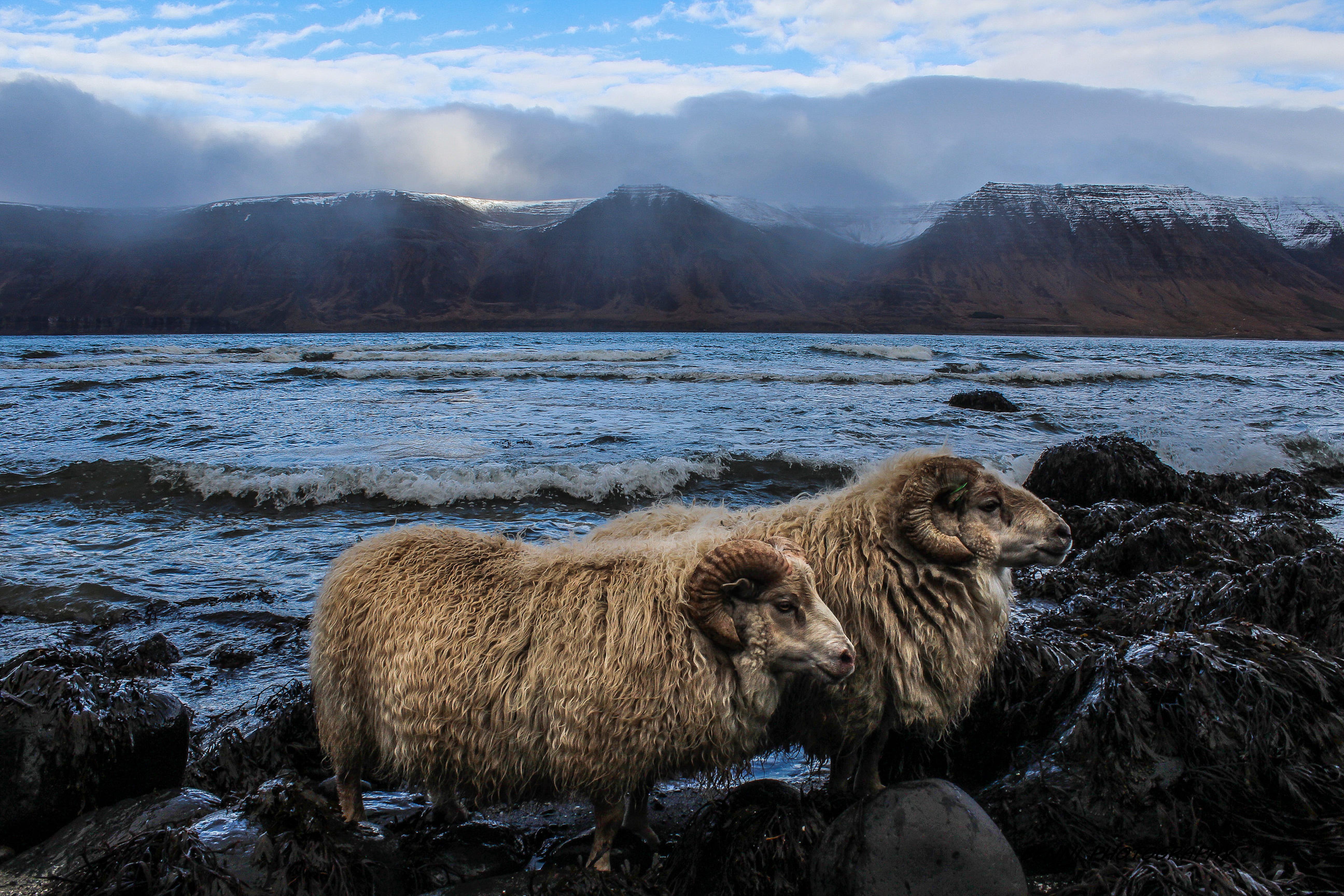 讓冰島人告訴你在西峽灣生活的點滴趣事